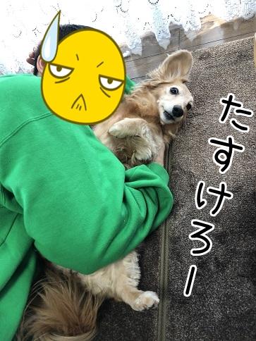 kinako18147.jpeg