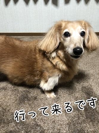 kinako18168.jpeg