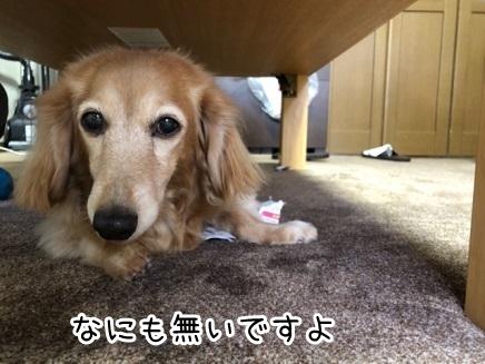kinako18174.jpeg