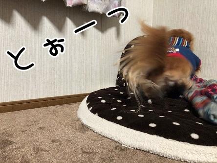 kinako18177.jpeg