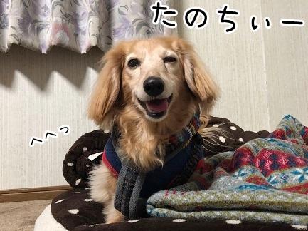kinako18178.jpeg