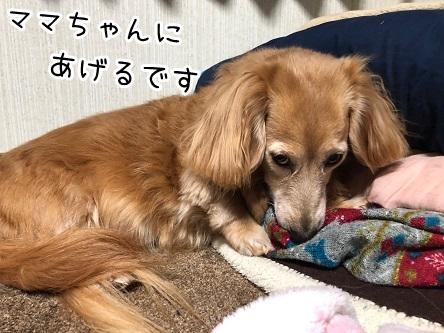 kinako18925.jpeg
