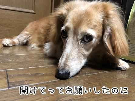 kinako18933.jpeg