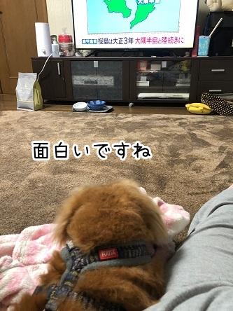 kinako18950.jpeg
