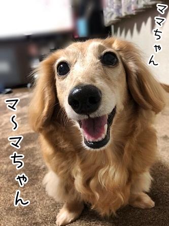 kinako18963.jpeg