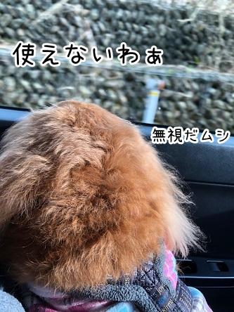 kinako18998.jpeg