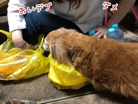 kinako19010.jpeg