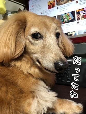 kinako19015.jpeg