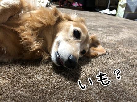 kinako19020.jpeg