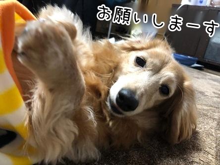 kinako19022.jpeg