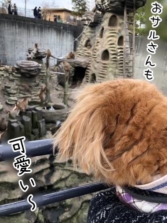 kinako19025.jpeg