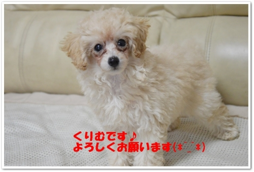 ダリアちぉんお迎え (5)