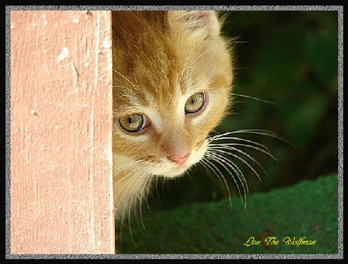 09a 500 Scamp spy cat