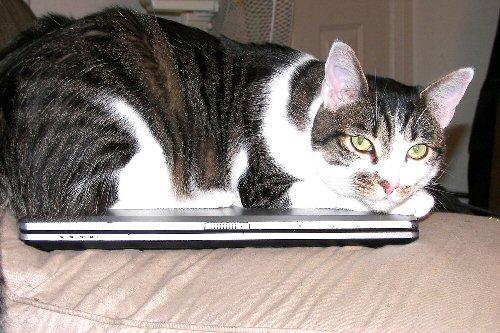 09b 500 Cat PC