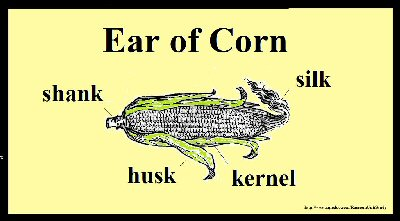 04ca 400 ear of corn