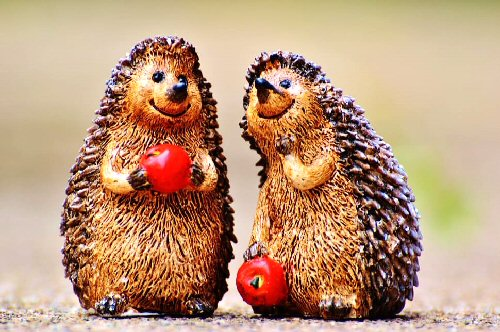 9b 500 two hedgehogs