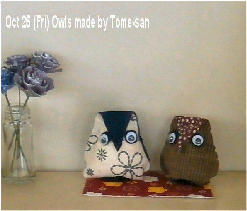 01a 500191025 Tome owls