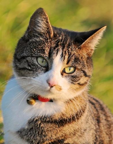 09c 500 sunset cat
