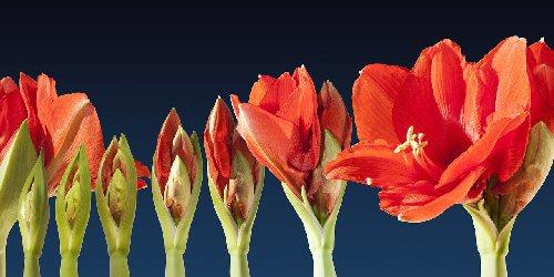 03b 500 grow flowers