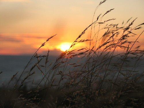03c 500 silver grass in the setting sun