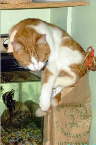 09d 350 fishing cat
