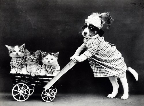 09b 500 kittens_and_puppy_vintage