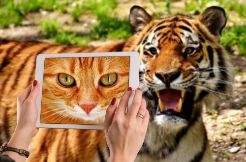 09b 500 tiger cat