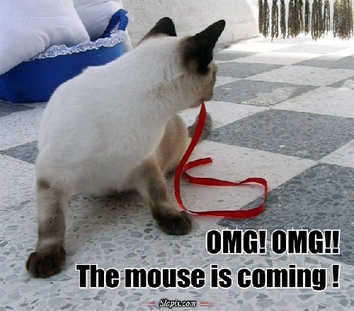 09d 500 OMG the mouse is coming