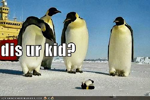 004b 500 penguin your kid