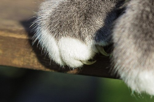 009a claw of cat