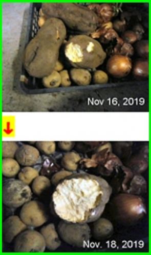 01c 300 biten sweet potato Process