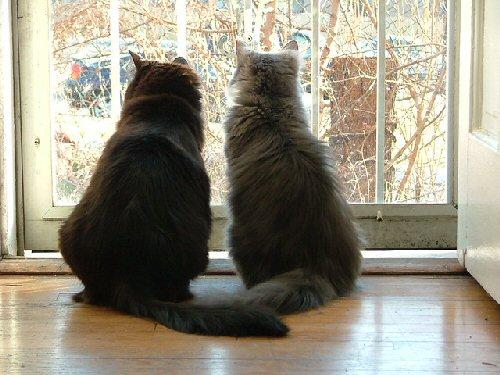 09d 500 365 cats