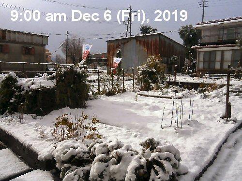 01b 500 LL Garden first snow