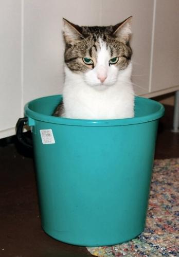 09b 500 sailor cat