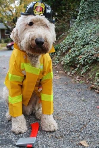 09b 500 firefighter dog
