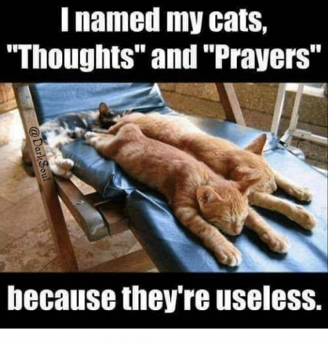 09c 500 cats thoughts prayers