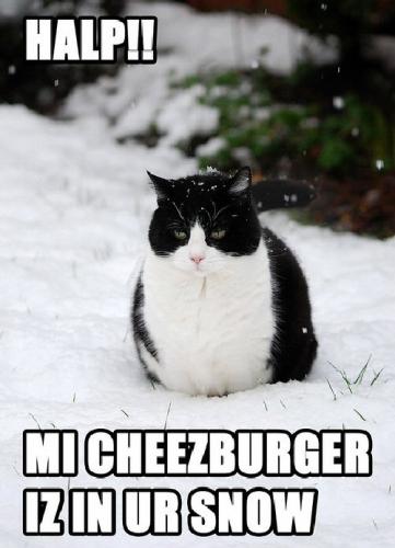 09d 500 lol cat my burger is in snow
