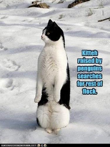 09d 600 cat rasing by penguins
