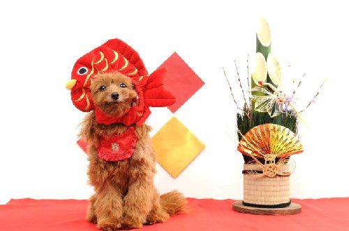 01a 500 Furikake お正月costume 2016