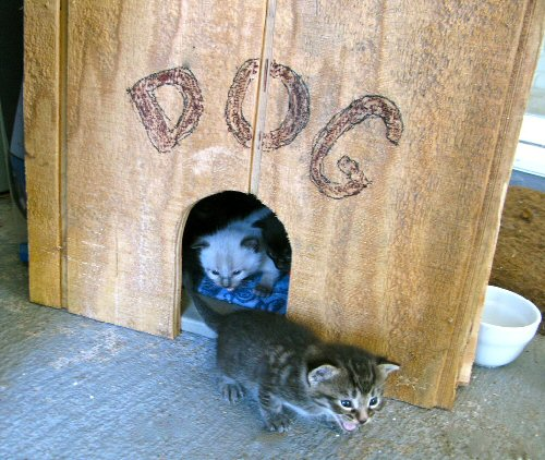 03ca 500 kittens in dog house