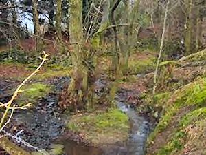 09c 300 steep stream