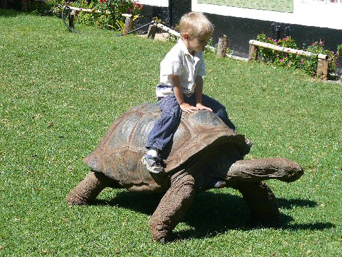 04d 500 kid and tortoise