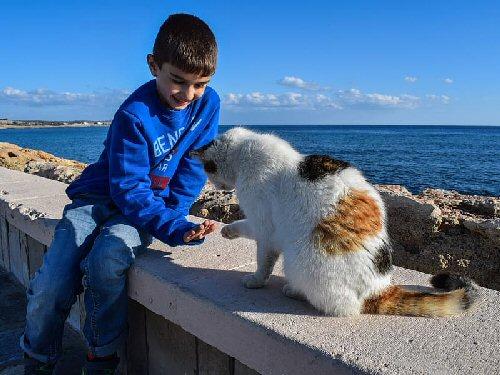 09c 500 Calico cat beside boy