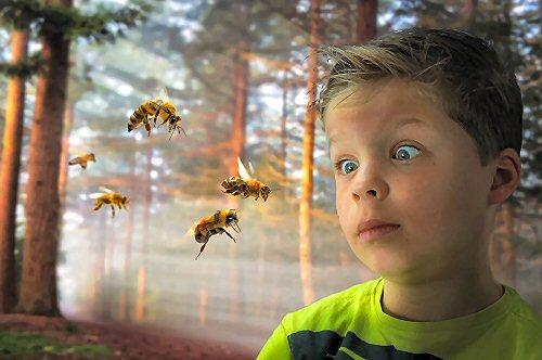 03a 500 buzz bee boy