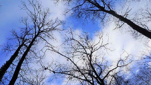 03c 500 leafless tree sky