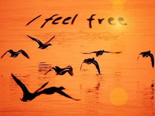 09a 500 free birds