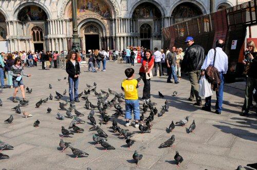 03c 500 San Marco pigeons
