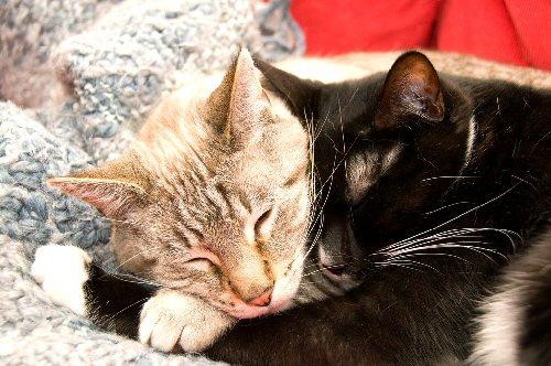 09c 500 cuddle cats