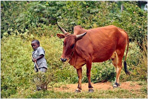 09b 500 african boy working
