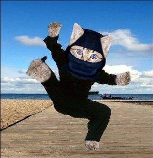03a 300 ninjacat